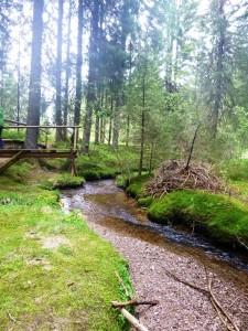 Bernau_Naturschutzgebiet.jpg
